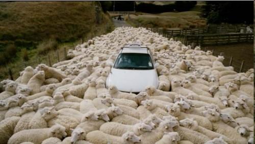 black-sheep-movie-5
